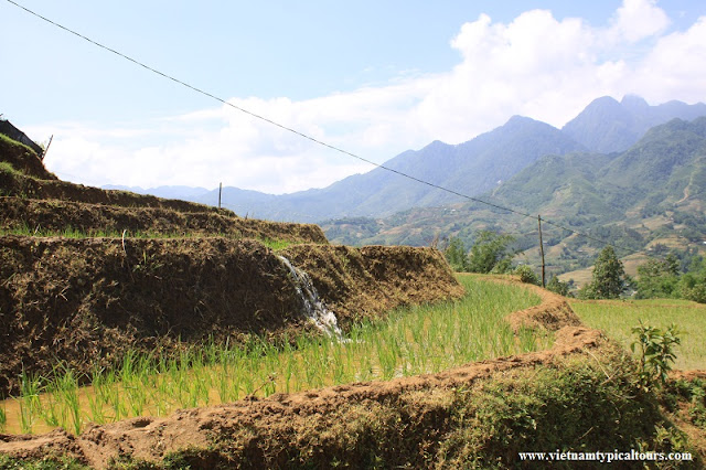 VIDEO: Homestay in Sapa – Hiking the Muong Hoa Valley