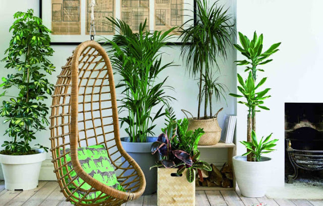 Large Indoor Plants And Trees