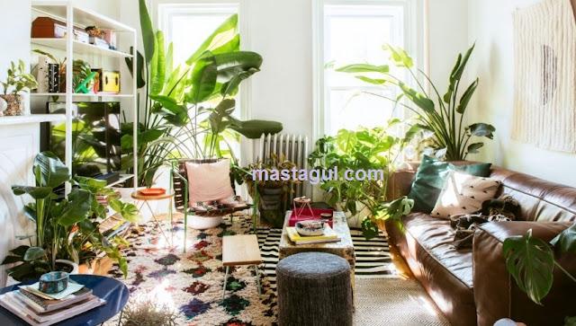 Tanaman Hias Indoor yang Cocok untuk Menghiasi Ruangan Kecil