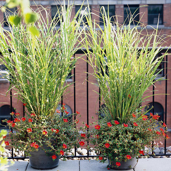 5 Ways to Decorate Your Cottage Garden Landscape with Ornamental Grasses