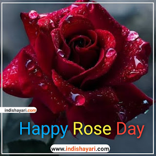 Happy Rose Day whishes sms quotes for whatsapp Facebook Instagram status