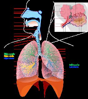 Mari-Mengenal-Organ-Organ-Sistem-Ekskresi-Yang-Ada-Pada-Manusia-Beserta-Fungsinya