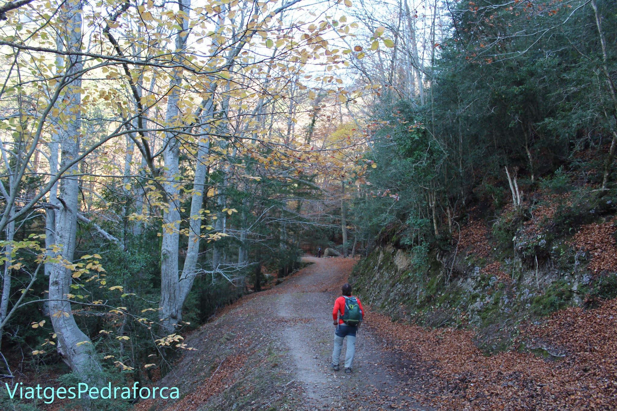 boscos de tardor, Catalunya, Terres de l'Ebre