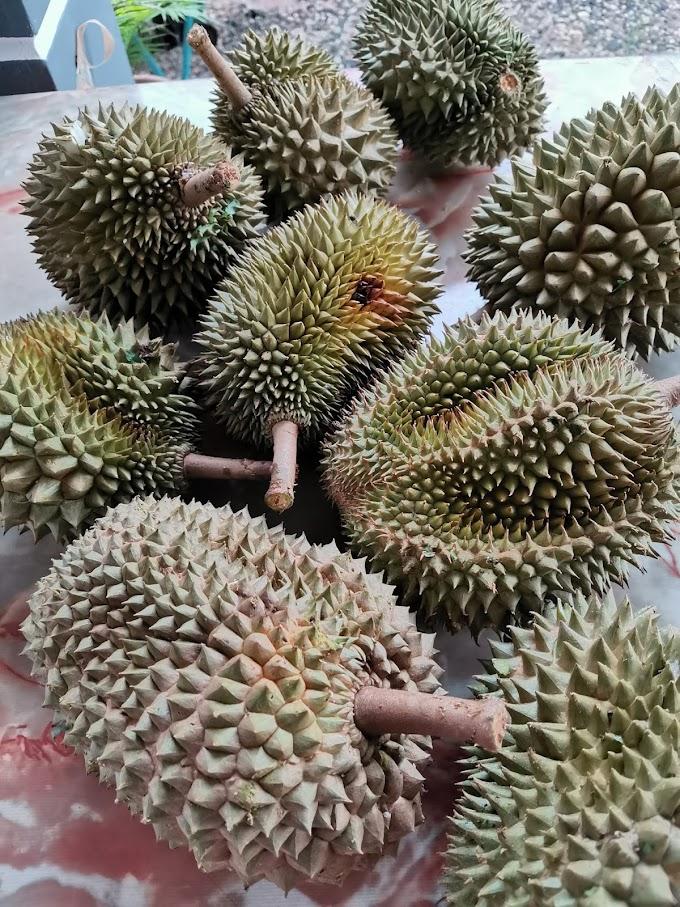 Makan Banyak Durian (Fakta dan Mitos Durian)