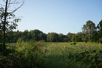 Podmokłe łąki w okolicach Małego Truskawia