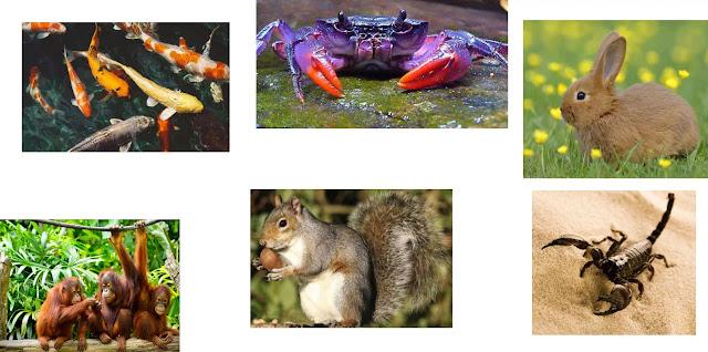 Contoh konsumen kelinci, ikan, tupai, kepiting, orang utan, kalajengking