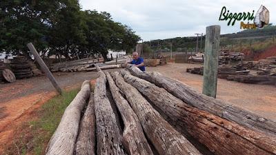 Bizzarri procurando postes de Aroeira, essa madeira de demolição são postes de árvores antigas que eram usadas na rede de energia, algumas peças chegam a ter mais de 100 anos e também eram cortados para fazer dormentes de Aroeira. 24 de março de 2017.
