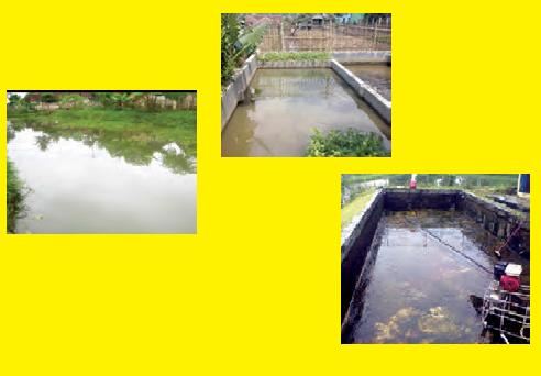 Jenis Jenis Kolam Budidaya Ikan Dan Desainnya Awalilmu Com
