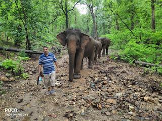Elephant Whisperer , Anand Shinde