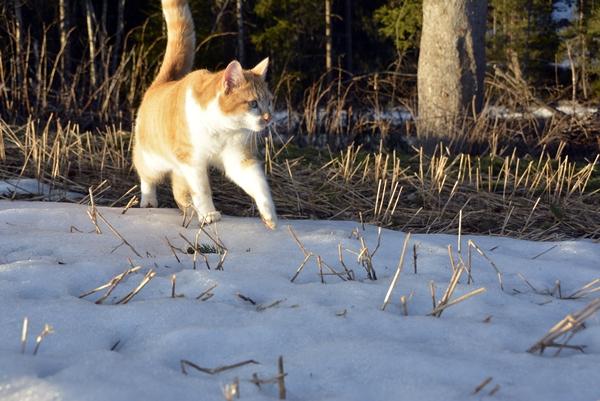 katt jorde