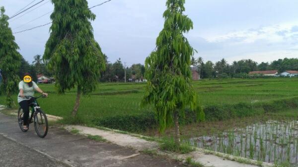 Kenapa Sih Sinyal 3 Tidak Ada di Purworejo
