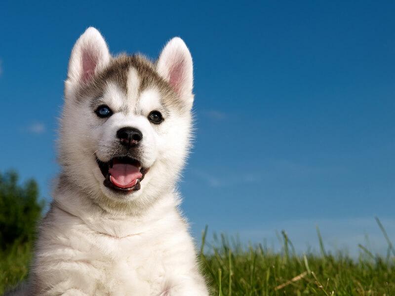 Puppy Development from 8 to 12 week