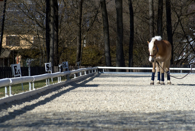 Equine Economy: Ways To Save Money While Caring For A Horse