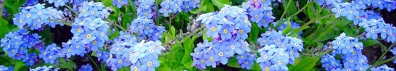 Цветы Святой Земли