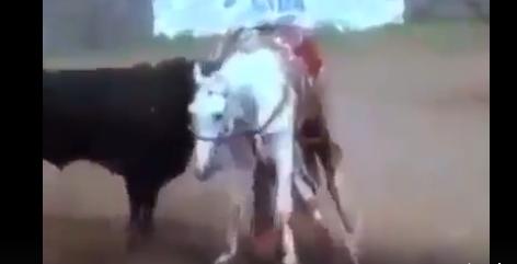 شاهد ماذا فعل الثور الهائج في هذا الحصان !! لا حول ولا قوة إلا بالله
