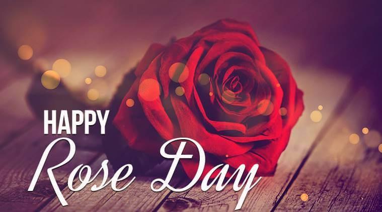 Rose Day 2020 Download