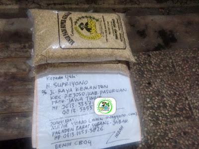 Benih Padi Pesanan   H. SUPRIYONO Pasuruan, Jatim.  (Sebelum Packing).