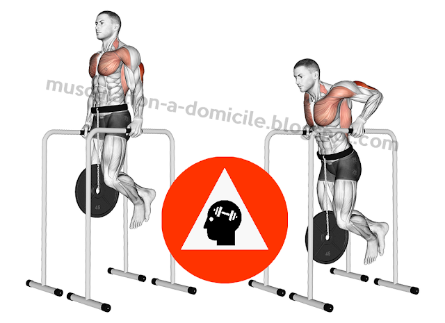 musculation exercice dips triceps lestés fonte