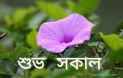 Good Morning SMS In Bangla