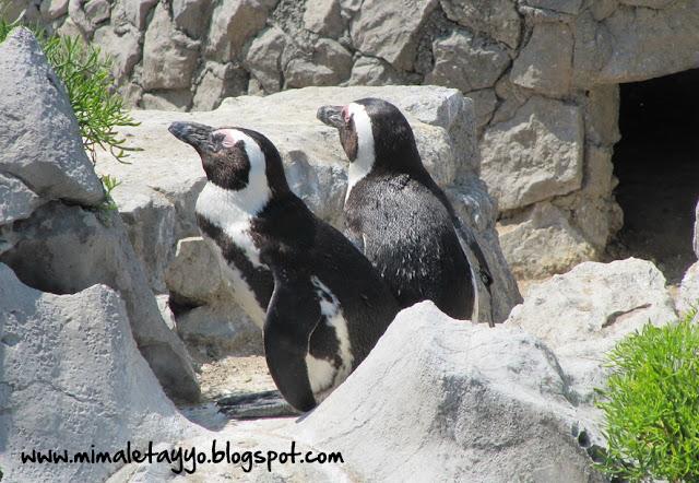 Zoo en la Península de la Magdalena, Santander