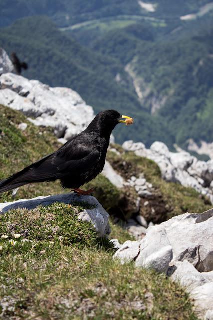 Zweitätige Wanderung im Gesäuse von Gsatterboden zum Buchsteinhaus und weiter über den Südwandband Klettersteig auf den Großen Buchstein - Vogelfütterung