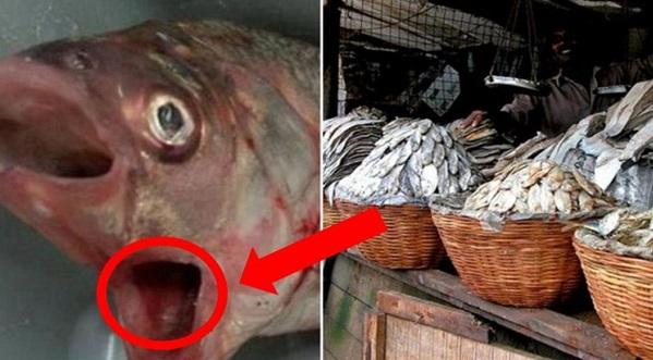 AWAS !! Sedap dimakan, tetapi bahaya untuk kesihatan. Awas, hindari makan lima jenis ikan ini!