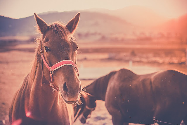 cutand-dry.blogspot.com horses