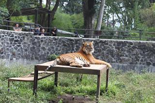 Kebun Binatang Bandung - Outbound Lembang Bandung