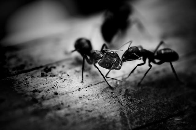 मुंग्यांबद्दल या गोष्टी वाचून डोक्यात मुंग्या येतील | खासमराठी
