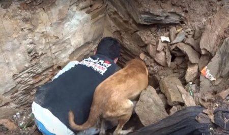 Трогательное видео спасения щенков из-под завалов дома заставило пользователей разрыдаться. Собака и человек приложили все силы