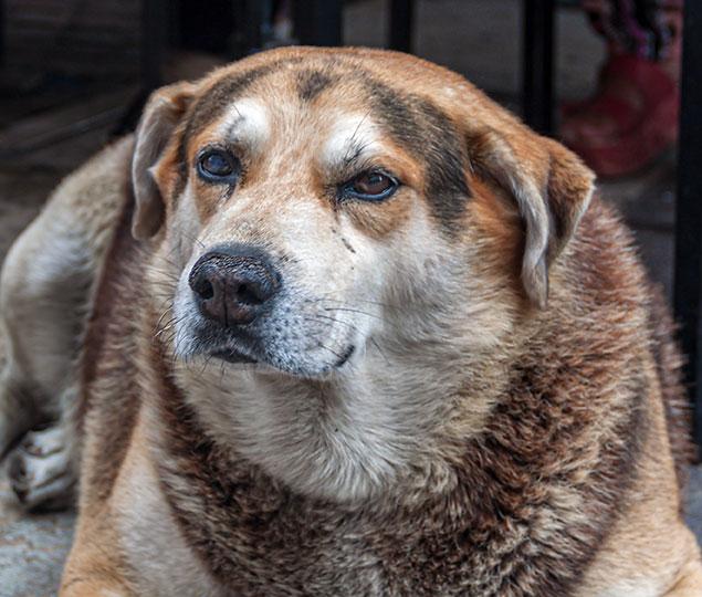 Retrato de un fiel perro.