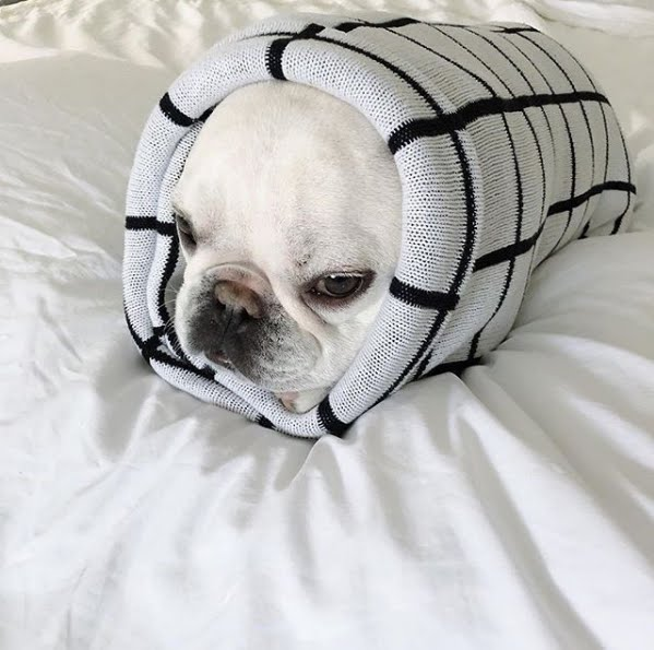 Frenchie Burrito