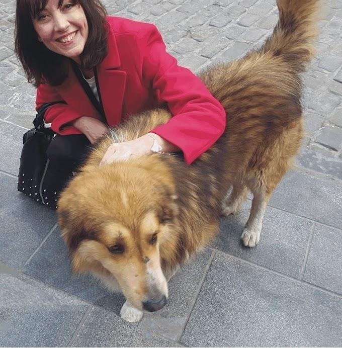 Θεσσαλονίκη: Κακοποίησαν τον Σόλωνα τον σκύλο - σύμβολο των Λαδάδικων