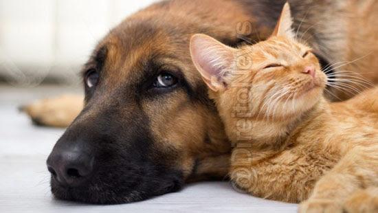 pena maus tratos caes gatos direito