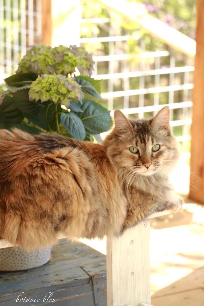 cat-with-hydrangea
