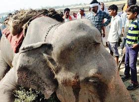 Forest Official  File Case Against Elephant Owner Uttar Pradesh