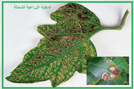 سؤال و جواب في التسميد :  كيف يمكن ملاحظة اعراض نقص العناصر الغذائية في اشجار الفاكهة ؟
