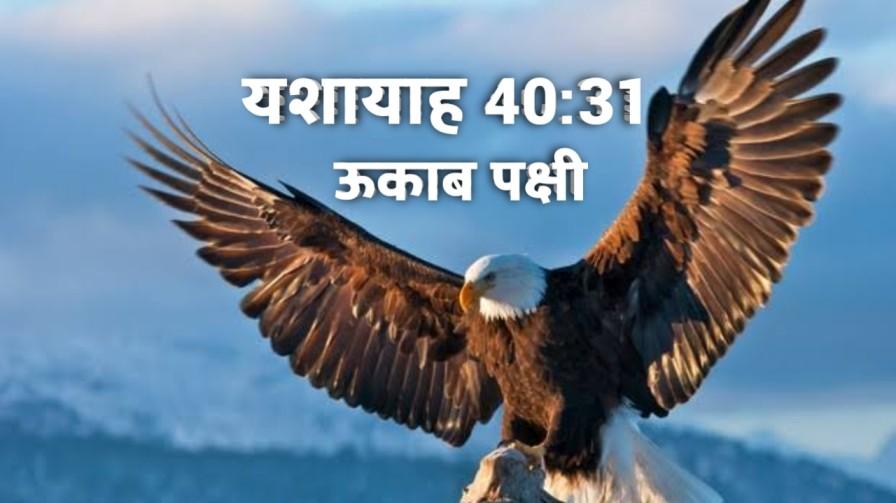ऊकाब पक्षी के समान नया बल - यशायाह 40: 31