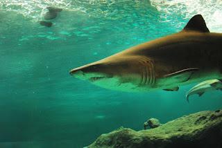 Shark fish. Hindi fact. Amazing facts in hindi.