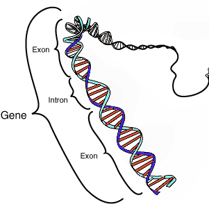 Lima Sumber Asupan Terbaik Gen untuk Menjaga Daya Tahan Tubuh Selamanya