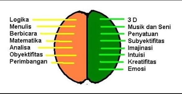 Cara Kerja Otak Kanan Dan Otak Kiri Serta Fungsinya ( Calon Pengusaha Wajib Tahu Nich )