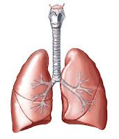 Lung (paru-paru)