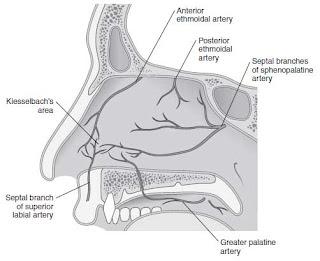 Epistaxis anatomy