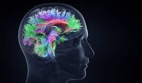 Las conexiones del cerebro