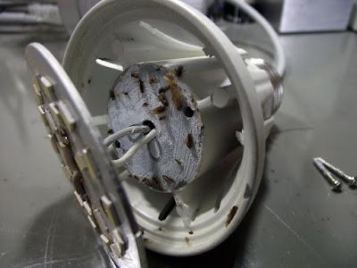 Insetos na Lâmpada de LED