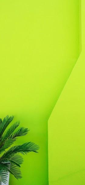 خلفية شجرة زينة خضراء أمام جدار أخضر