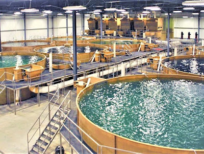High Density Indoor Aquaculture System in Bangladesh