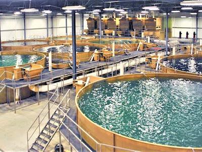 High Density Indoor Aquaculture System in Bangladesh