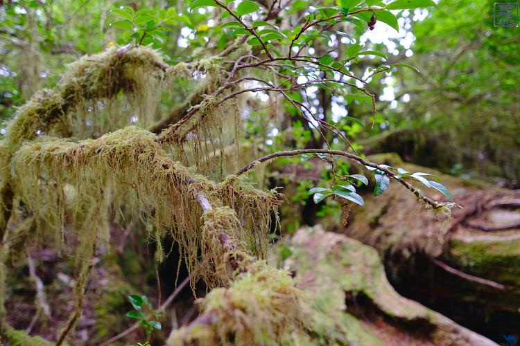 Le Chameau Bleu - Végétation des forêts de Tofino - Ile de Vancouver Canada