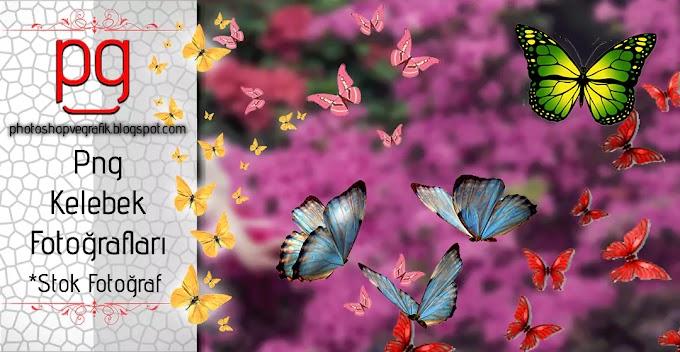 Png Kelebek Fotoğrafları | Png Butterfly Photos